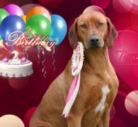 Taruska_2.narozeniny