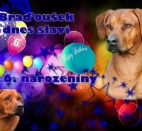 Bradousek_6let